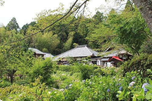 あじさい寺(極楽寺)