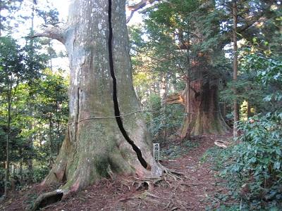 千葉山 智満寺(つねたね杉)