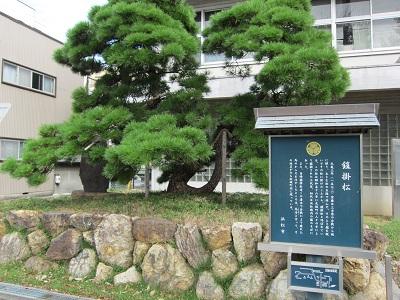 浜松城(鎧掛松)