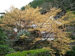 静居寺(庭園)