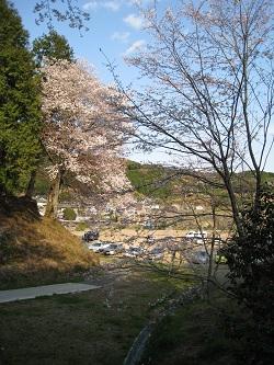 慶寿寺(枝垂桜)
