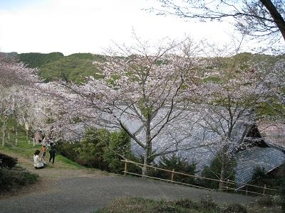慶寿寺と枝垂桜3