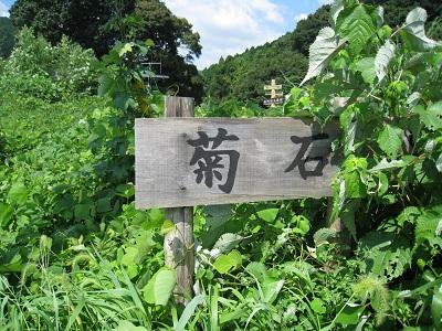 菊石(看板)
