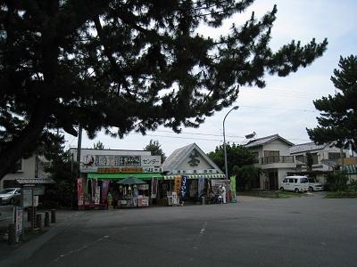 mihonomatsubara11