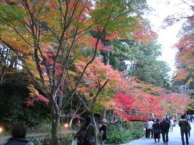 小国神社(紅葉)