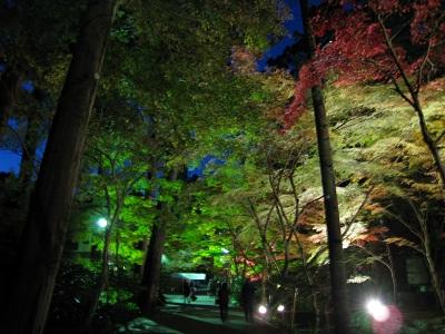 小国神社(紅葉・夜)
