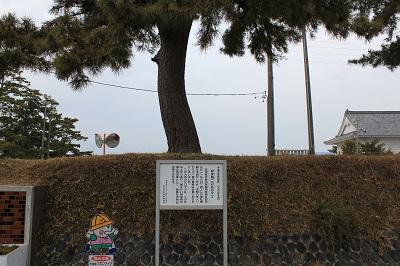 相良城二ノ丸の松