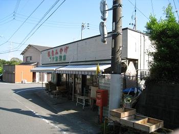 sakuragaike7
