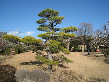 清水邸庭園(松)