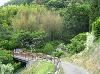白藤の滝(景色)