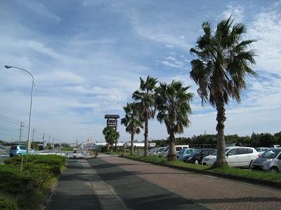 大須賀物産センターサンサンファーム(やしの木)