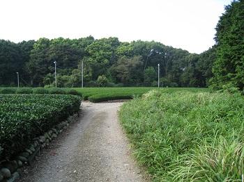 諏訪原城跡(入口)