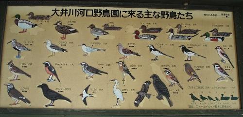 大井川河口野鳥園(鳥の種類)
