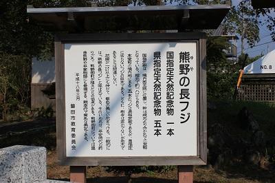 熊野の長藤(看板)