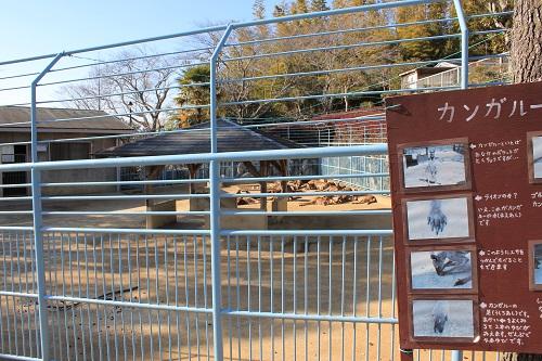 浜松市動物園(カンガルー)