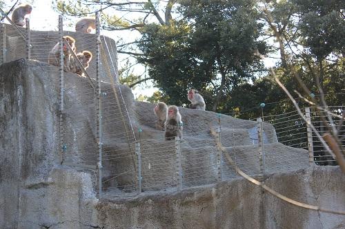 浜松市動物園(さる)