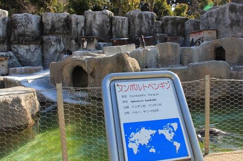 浜松市動物園(フンボルトペンギン)