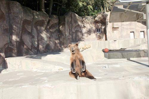 浜松市動物園(くま)