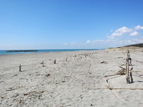 中田島砂丘(浜)