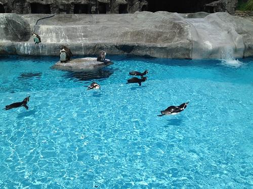 日本平動物園(ペンギン)