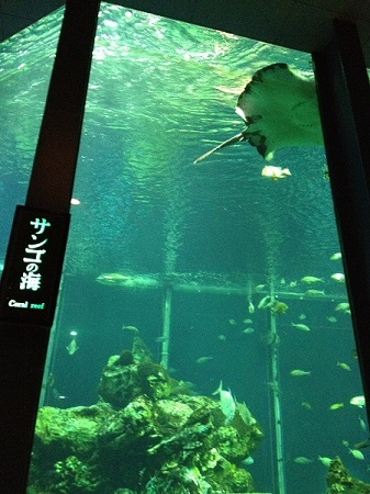海洋水槽(東海大学海洋科学博物館)