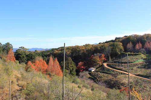 日本庭園からフェアリーガーデンへ向かう途中(修善寺虹の郷)