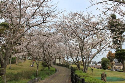 高松みどりの森公園の桜