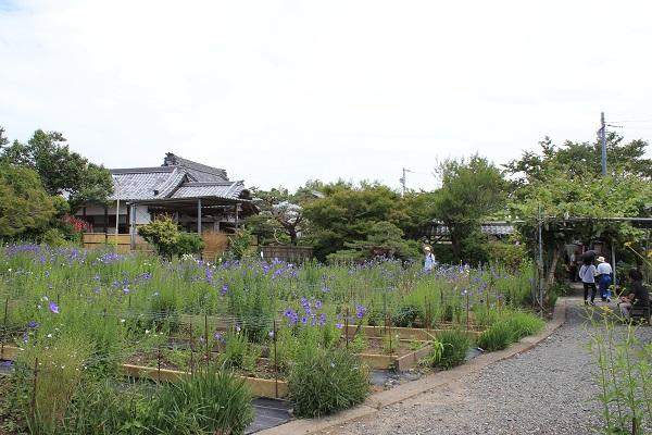 ききょう庭園(香勝寺/ききょう寺)