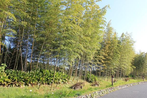 浜名湖ガーデンパーク(竹の小路)