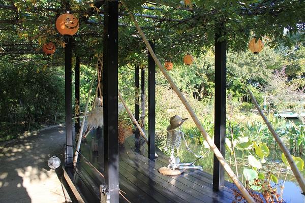 浜名湖ガーデンパーク(モネの庭 ハロウィーン)