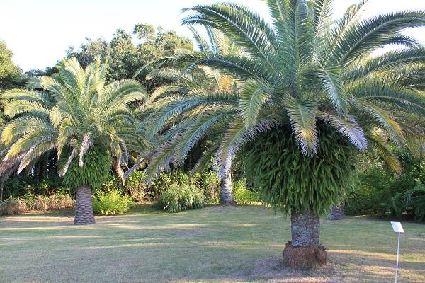 浜名湖ガーデンパーク(南国風ヤシの木)