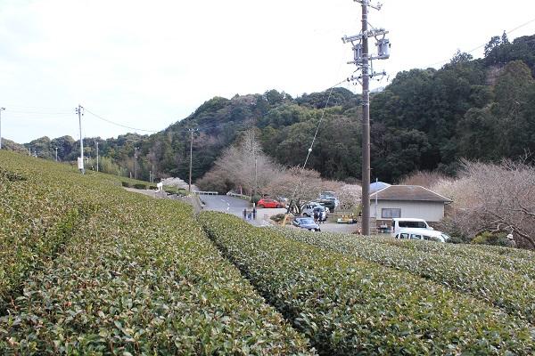 相良梅園(チケット売り場 遠景)