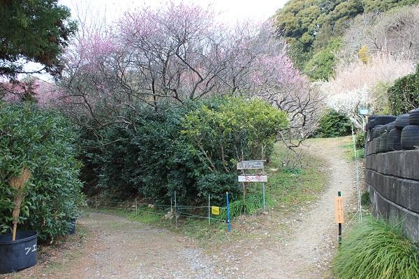 相良梅園(梅園入口)