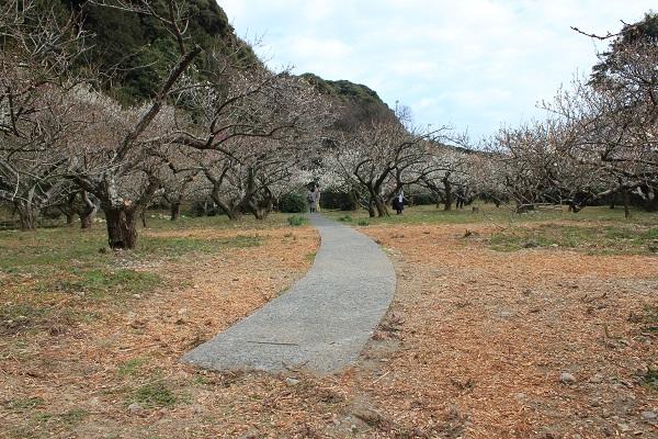 相良梅園(歩道)