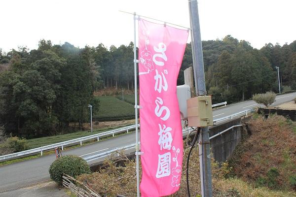 相良梅園(さがら梅園の旗)