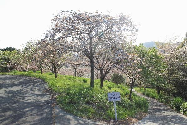 はままつフルーツパーク(桜園)
